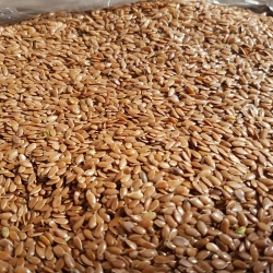 Linseed/Flaxseed (Brown)